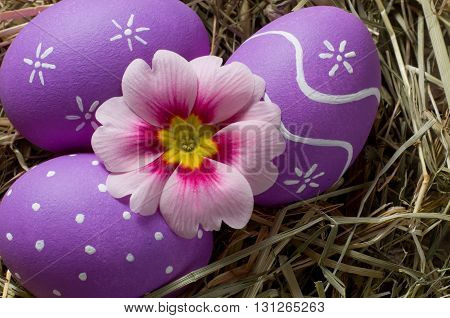 Colourful easter eggs and primerose flower in a nest