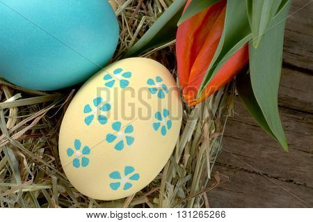 Colourful easter eggs with hay and red tulip
