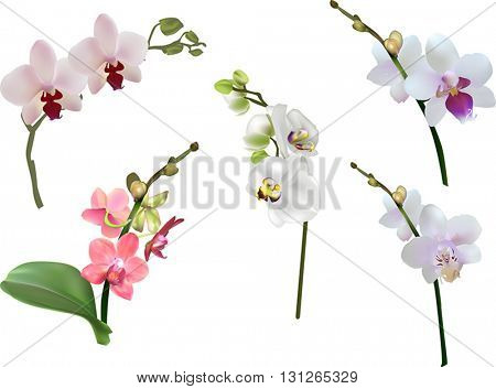 illustration with light isolated orchids collection