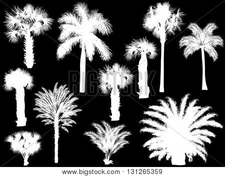illustration with palm silhouettes isolated on black background