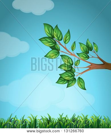 Scene with branch and grass illustration