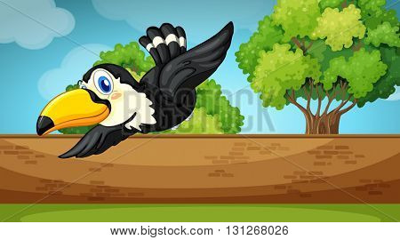 Scene with toucan flying over the wall illustration