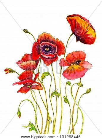 hand painted poppies with watercolor brush strokes and ink sketch lines