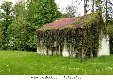 Shed with a roof in sheet steels rust with some ivy on all the facade.
