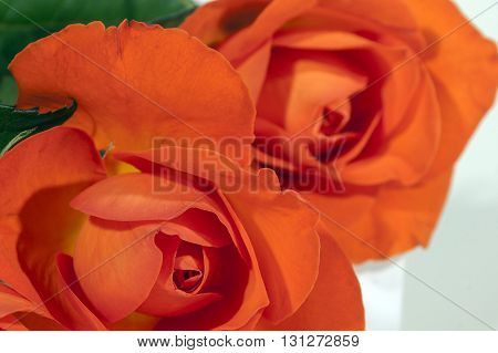 Close Up Detail Of Brightly Colored Red Roses