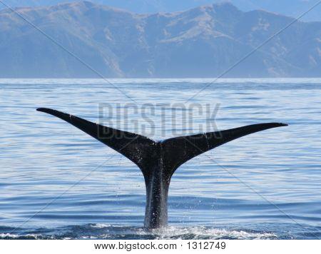 Whaletail3