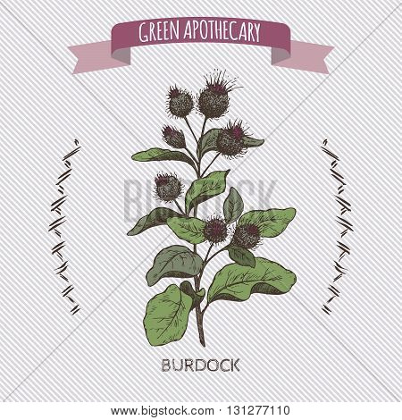 Color Arctium lappa aka greater burdock sketch. Green apothecary series. Great for traditional medicine, cooking or gardening.