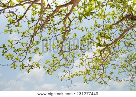 The green leaf on the blue sky background