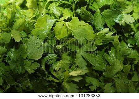 Parsley green for a healthy diet and a happy life.
