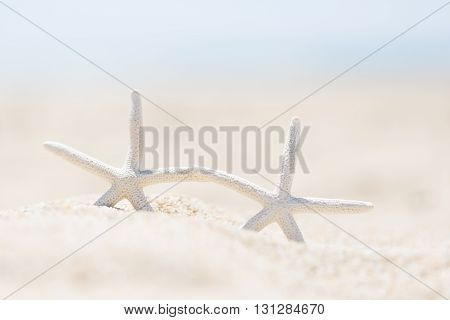 closeup picture of two starfish at the beach vacation concept