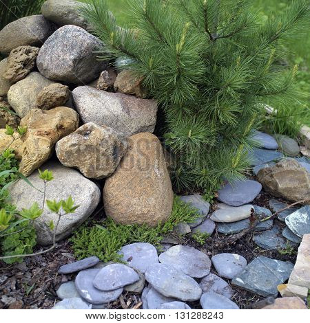 Closeup of a garden with stones and small pine tree