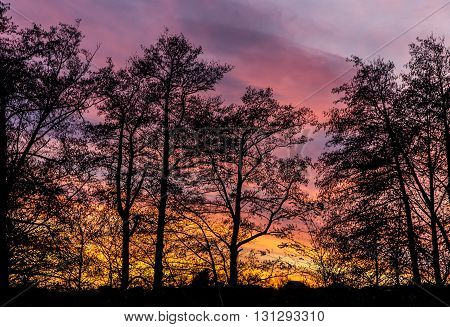 Beautiful sunset background with trees and red clouds