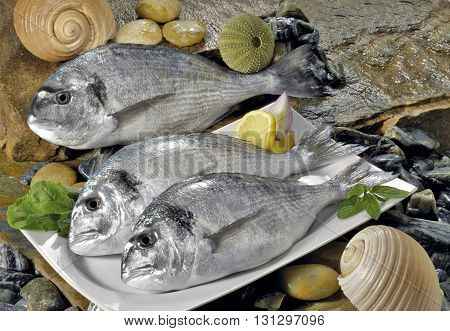 natural stone floor on white porcelain plates include the fish