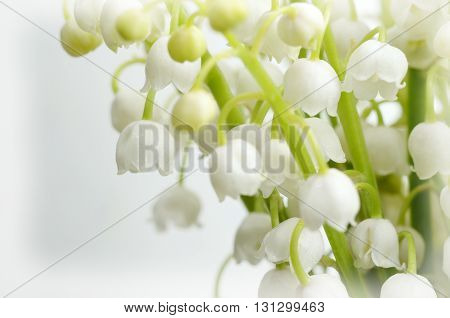 Lily of the valley close-up photo. Spring flower background with white vignette