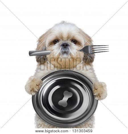 dog wants to eat and hold bowl and fork -- isolated on white
