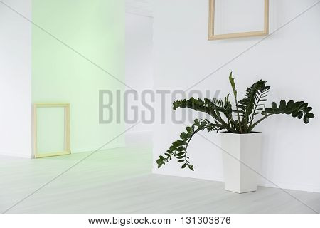Minimalist White Hall And Green Plant As Decoration