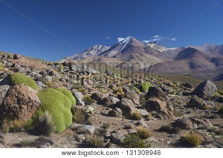 Landscape of the altiplano in Lauca National Park, northern Chile