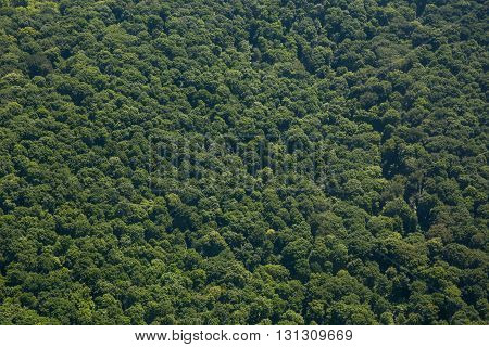 View at the forest photographed from the airplane