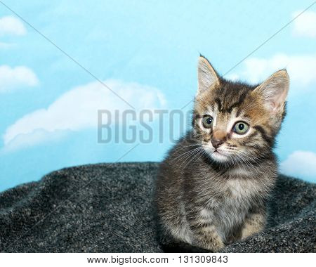 Tricolor Tabby Kitten 7 Weeks Old Sitting On A Textured Gray Pad Blue Background With White Clouds.