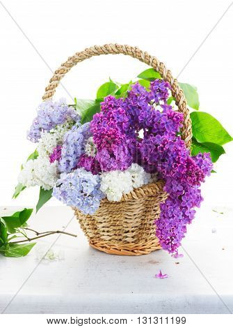 Bunch of fresh lilac flowers in basket on table isolated on white background