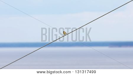 Bird titmouse sitting on a wire on a summer day