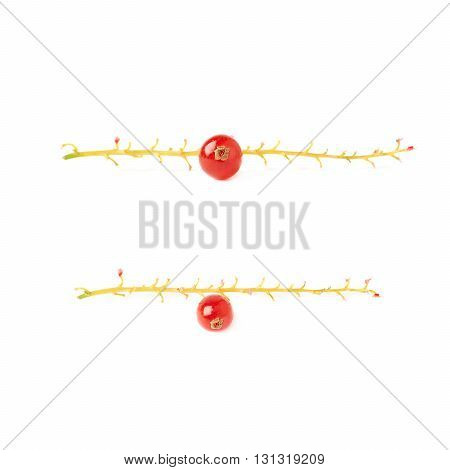 Set of Single berry of ripe Red Currant on branch isolated over white background