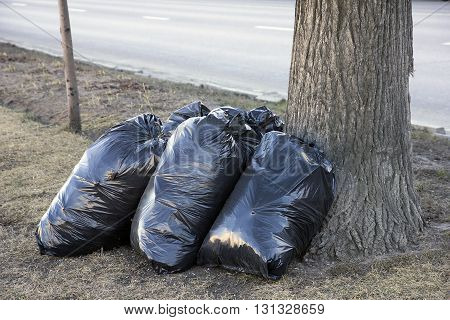 spring street cleaning - black garbarge bags with dry leaves near tree on lawn along city street Moscow Russia