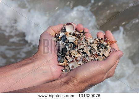 whole handful of small sea shells on the sea shore of italian adriatic sea