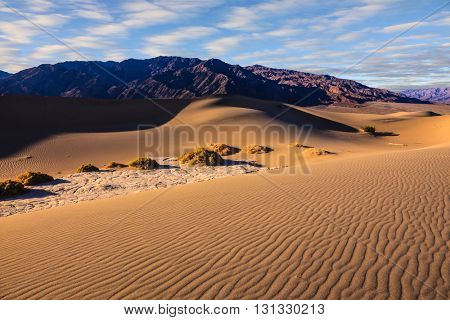 Mesquite Flat Sand Dunes in Death Valley. Orange light in the morning over sand dunes. Small bushes grow in the valleys between the dunes