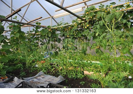 In The Greenhouse