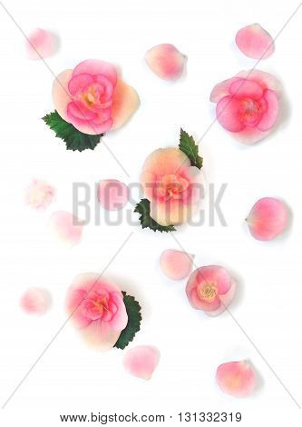 Various Red Flowers Head top view Isolated on White Background