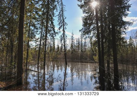 Flood on the lake in taiga forest