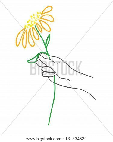 hand with flower on a white background. vector illustration