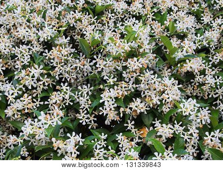 green background with white small flowers