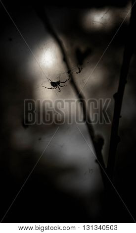 dark, black trees, gloomy types, night in the wood,spider on a tree branch