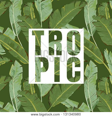 Tropical Leaves. Vector Background. Exotic Graphic Background. Tropical Banner.