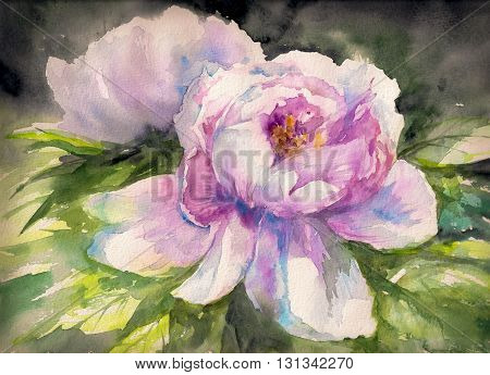 Beautiful pink Peony flowers.Picture created with watercolors.