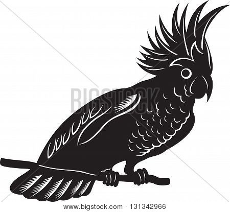 Cartoon exotic parrot, black and white illustration