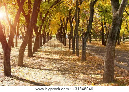 Walking path in autumn park with golden leaves on sunny weather.