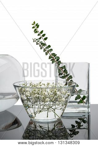 Decorative glass vases on black mirror table. In vases there are flowers of gipsofila and branch of a bush. Isolated on white background.