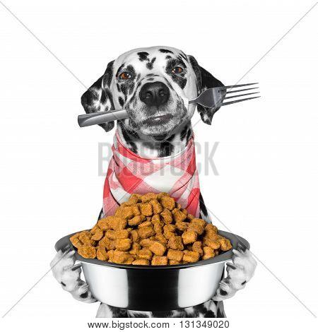 dog is hungry and keeps food and fork -- isolated on white