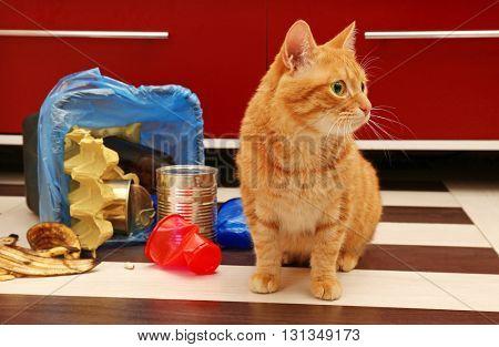 Red cat near full inverted garbage basket on kitchen floor