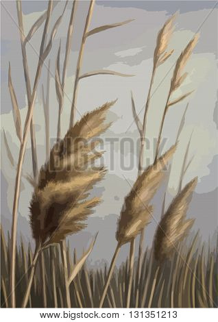 Reed against the sky illustration drawdring landscape