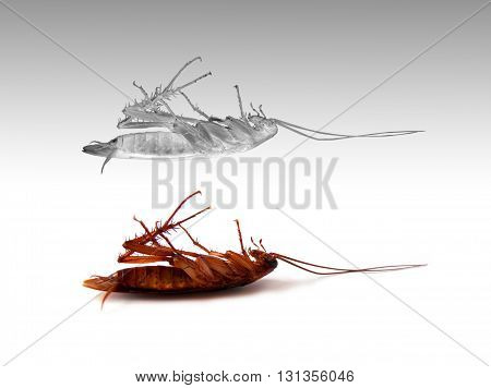 death insect cockroach with white spirit on grey background