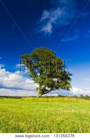Plain Nature Field Landscape