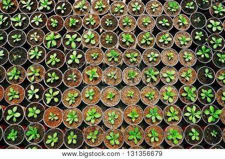 the photo of the plant seedling texture top view