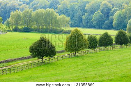 Beauty in nature summer landscape. Countryside view of green fields in England