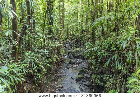 Dense Jungle With Small Creek