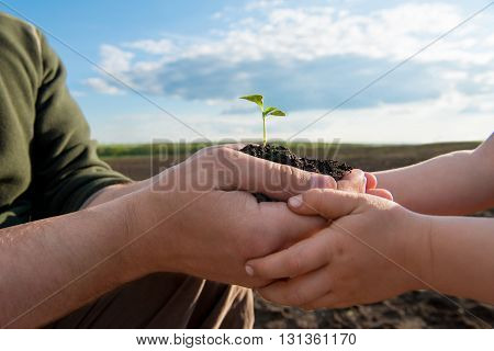 Father and child holding in hands a fresh young plant