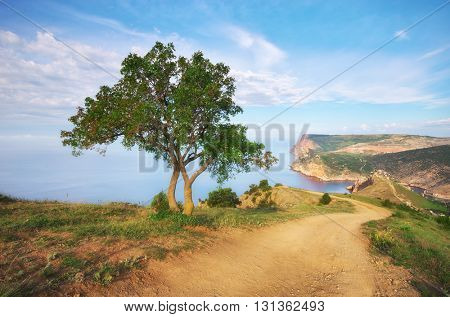 Mountain, tree and sea. Nature composition.